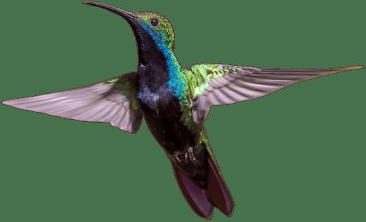 Kolibri Solutions - Webseiten & Weblösungen